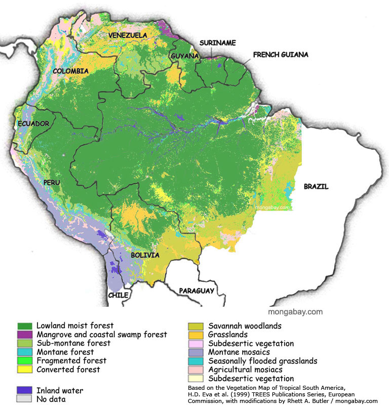 Record Number Of Wildfires In The Amazon Rainforest Could