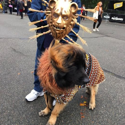 Pooches Show Off Their Boo-tiful Costumes At The Tompkins Square Halloween Dog Parade