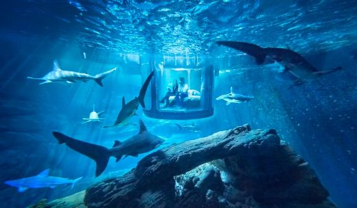 Always Wanted A Sleepover With Sharks? Then You May Want To Read This!