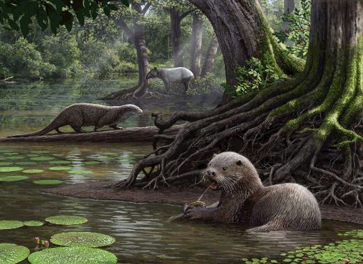 Otters The Size Of Wolves Once Roamed The Earth