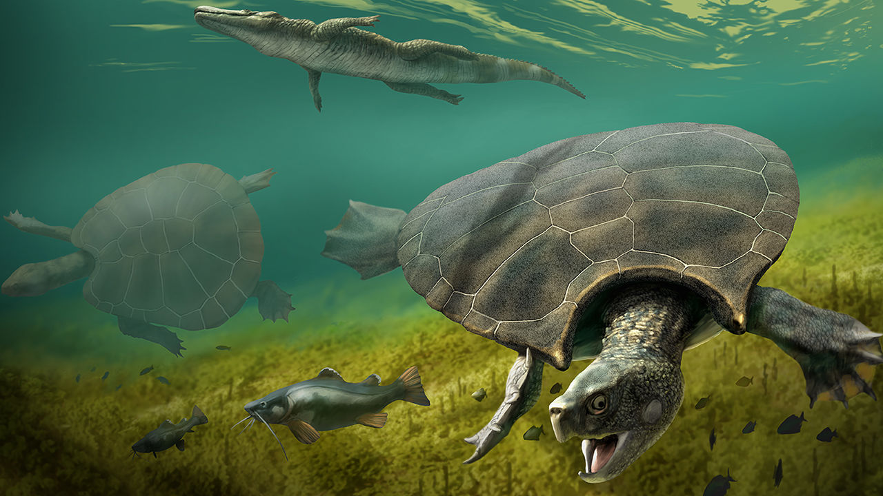 These Car-Sized Turtles Once Prowled The Lakes And Rivers Of Northern South America