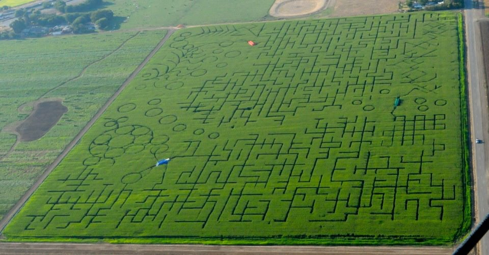World S Largest Corn Labyrinth Elicits Distress Calls From