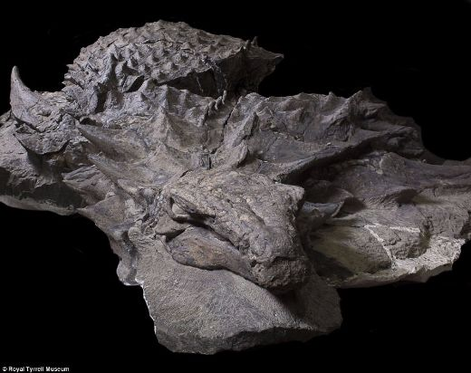 110-Million-Year-Old Dinosaur Is So Well Preserved, It Could Be Napping!