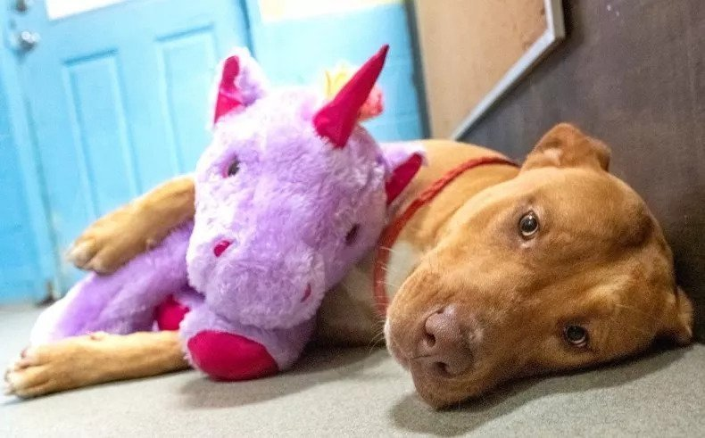 Adorable Stray Puppy Gets The Stuffed Unicorn Of His Dreams And A Forever Home