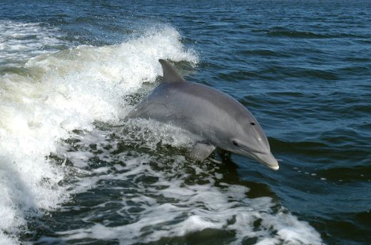 Guess What? Dolphins Might Enjoy Television Just As Much As Us!