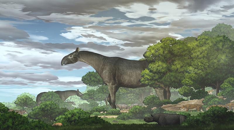 This Prehistoric Rhino Was Taller Than A Giraffe And Four Times Heavier Than An Elephant