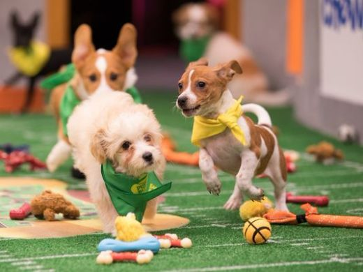 Puppy Bowl 14 Promises Viewers A Paw-some Time On Super Bowl Sunday