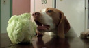 Video Of the Week - A Dog That Loves . . . . Cabbage?