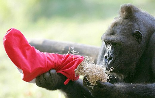 Taronga Zoo Animals Enjoy An Early Christmas