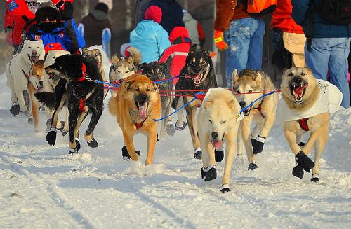 Alaska's 41st Iditarod Race Begins With Ceremonial Start