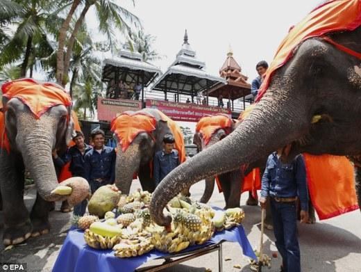 Dig In! Thai Elephants Indulge In A Scrumptious Buffet