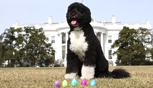 Video Of The Week - First Dog Goes On An Easter Egg Hunt