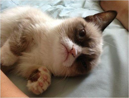 Tardar Sauce Kitten