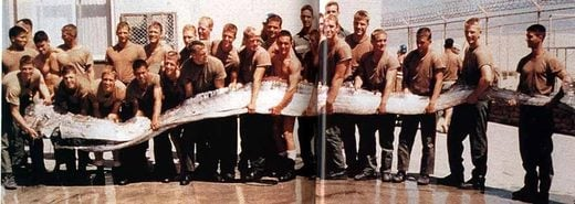Two Rare Oarfish Discovered Off Southern California's ... Oarfish 56 Ft