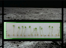 A Vegetable Garden On The Moon? NASA Certainly Hopes So