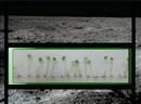 A Vegetable Garden On The Moon? NASA Certainly Hopes So
